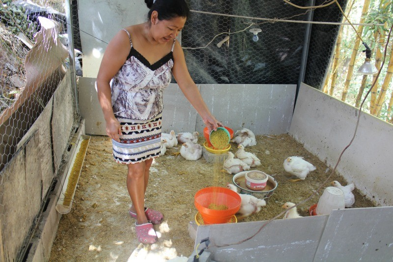 Meet Roxana's new chicken farm! 1